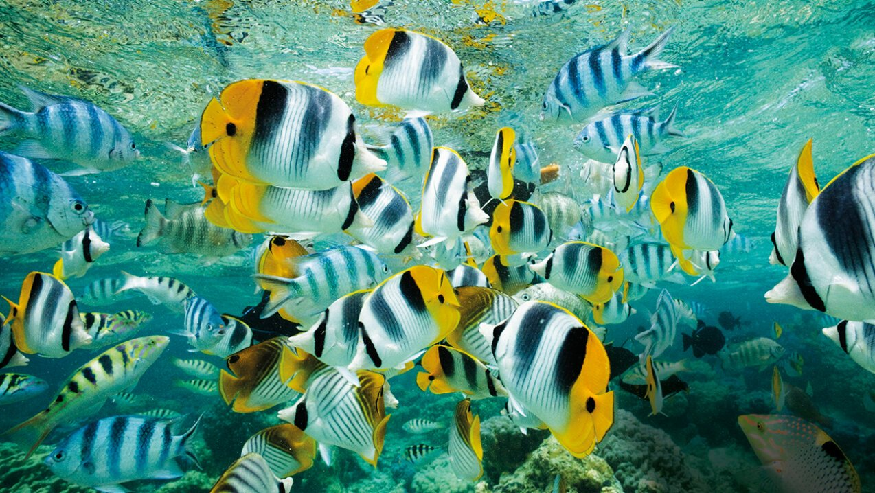 Tropical fish in the Seychelles