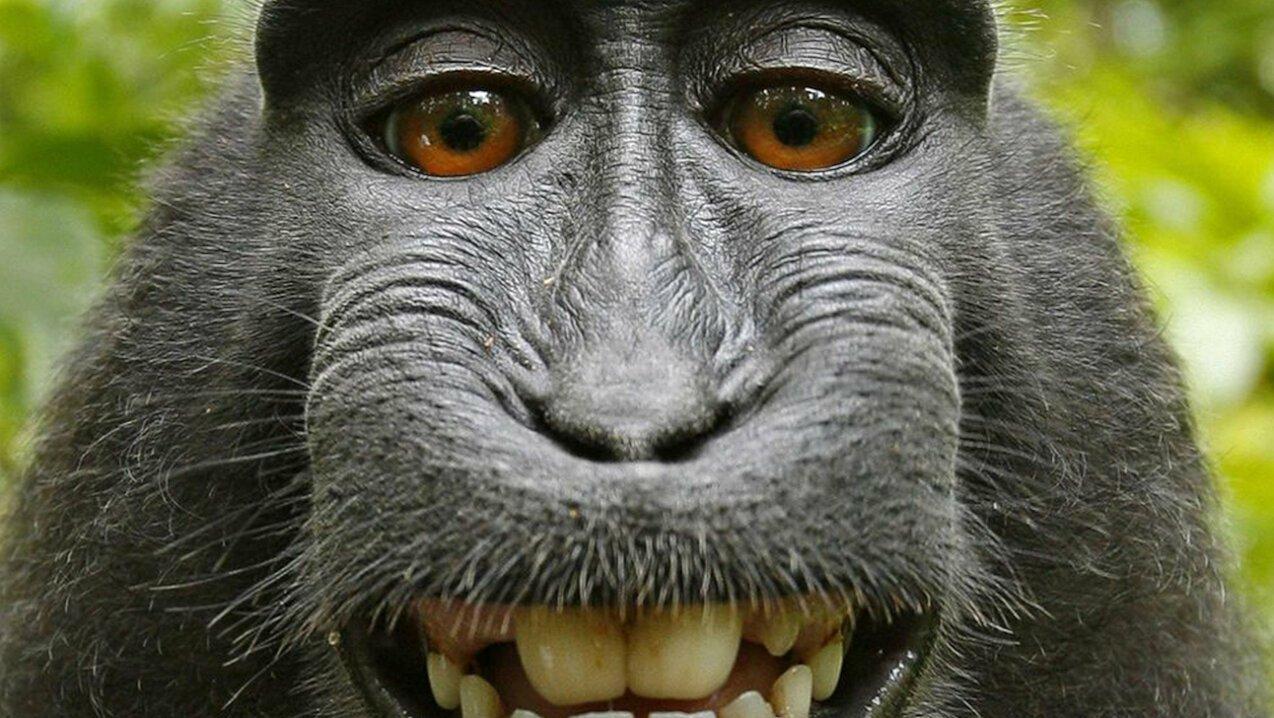 macaque money in Indonesia