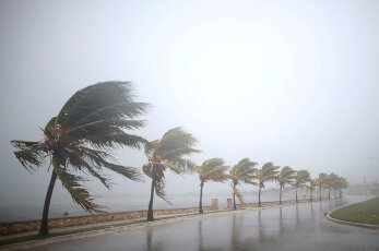 A line of palmtrees bent over in the wind during hurricane Irma, as heavy rain falls
