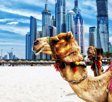 Red Sea and Arabian Gulf