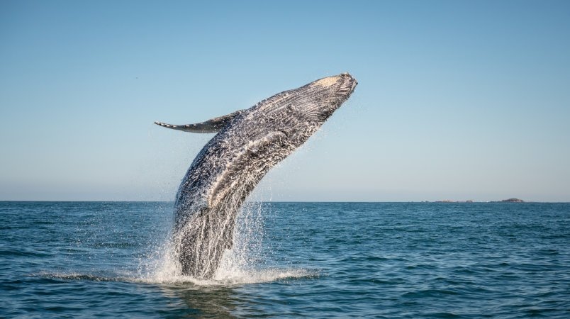 Sea safari, Baja style