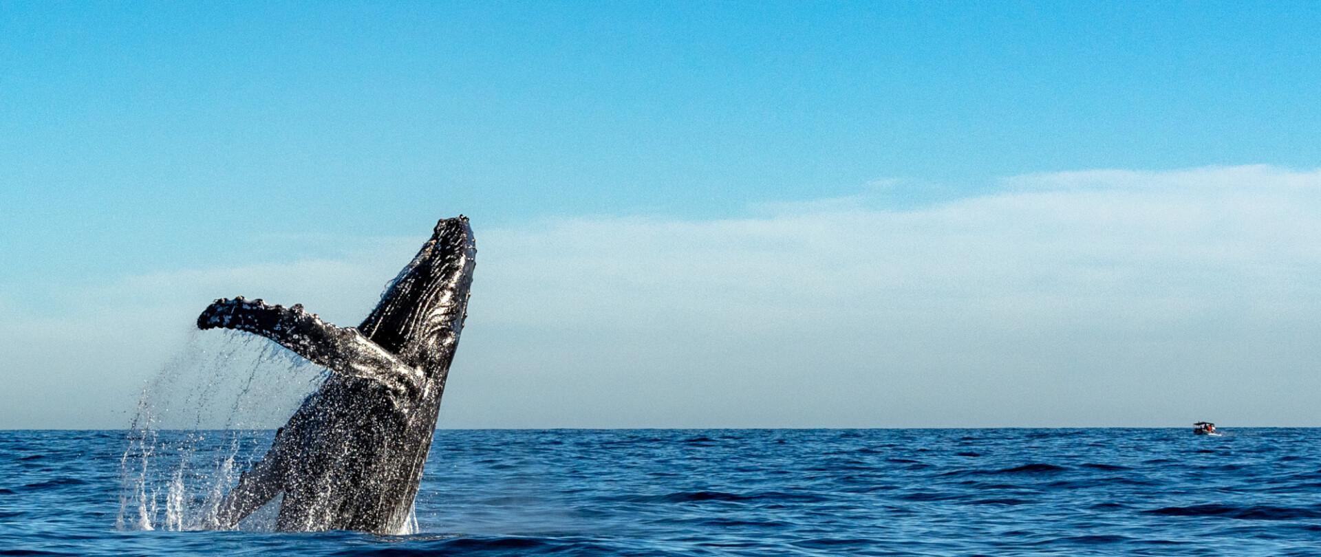 Mexico's super scuba sea safari photo 1